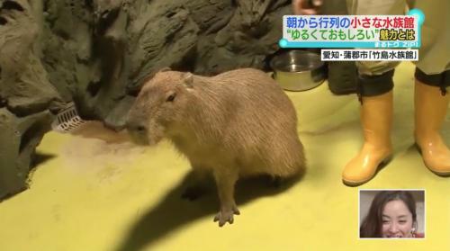 『竹島水族館』(愛知県蒲郡市)