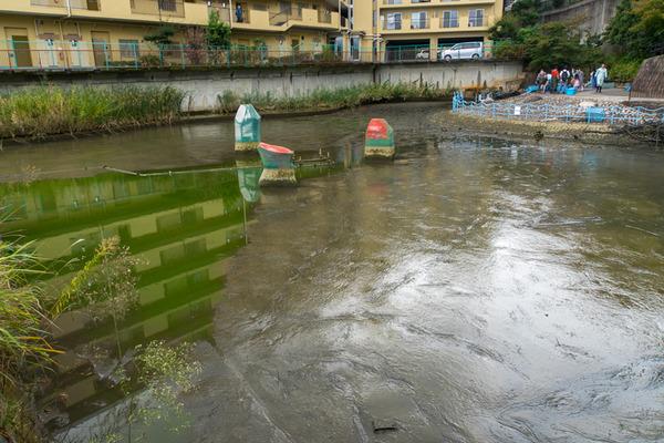 池の水2-1910205