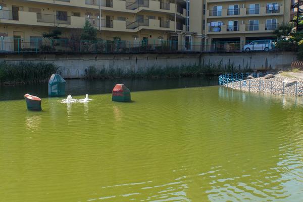 池の水-1910161