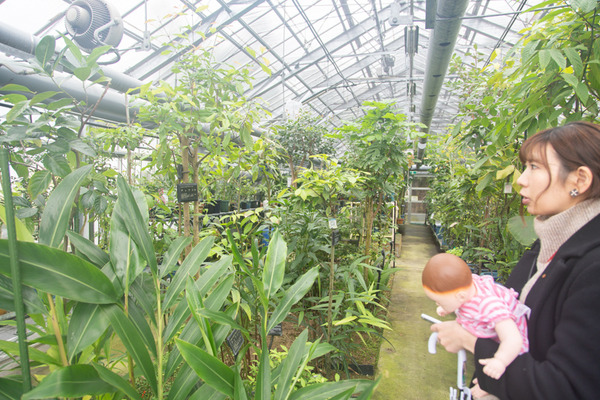 摂南大学植物園小-20021037
