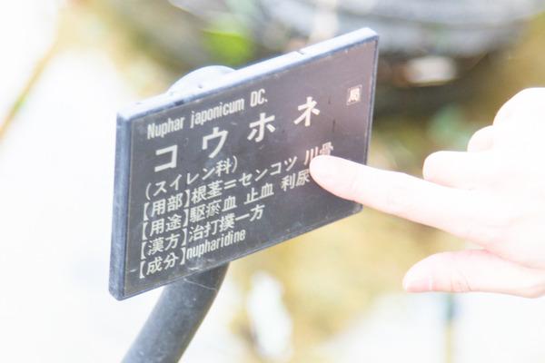 摂南大学植物園小-20021048