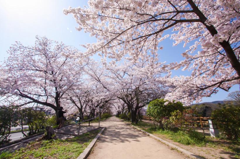 f:id:kyotoside_writer:20200312213813j:plain