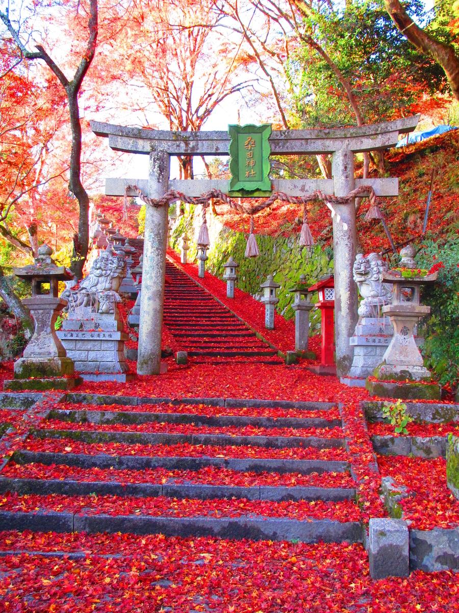 f:id:kyotoside_writer:20200924141420j:plain