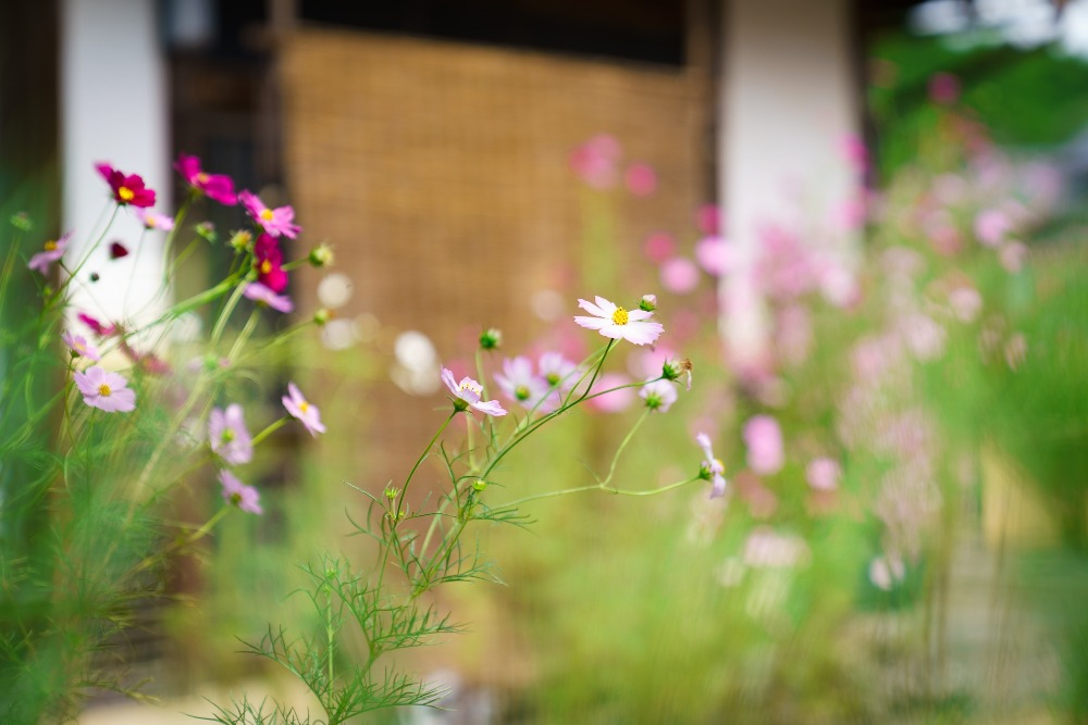 f:id:kyotoside_writer:20201014103005j:plain