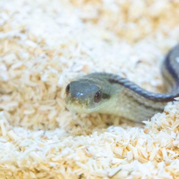 爬虫類-20100610