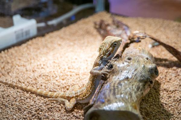 爬虫類-20100611