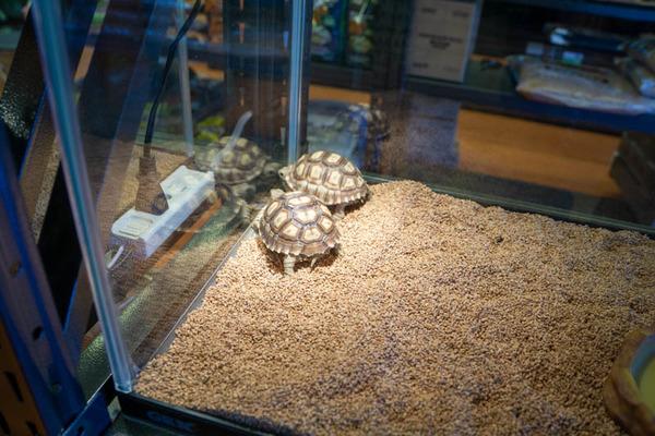 爬虫類-2010063