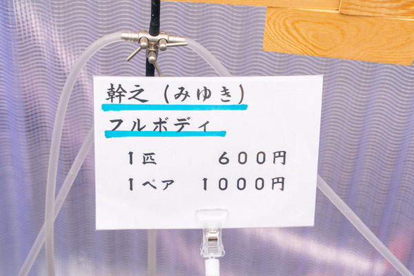めだか-2011259