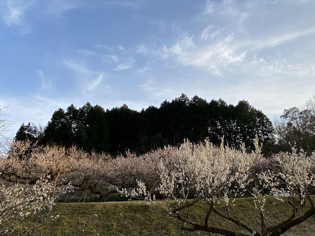 f:id:kyotoside_writer:20210201111659j:plain