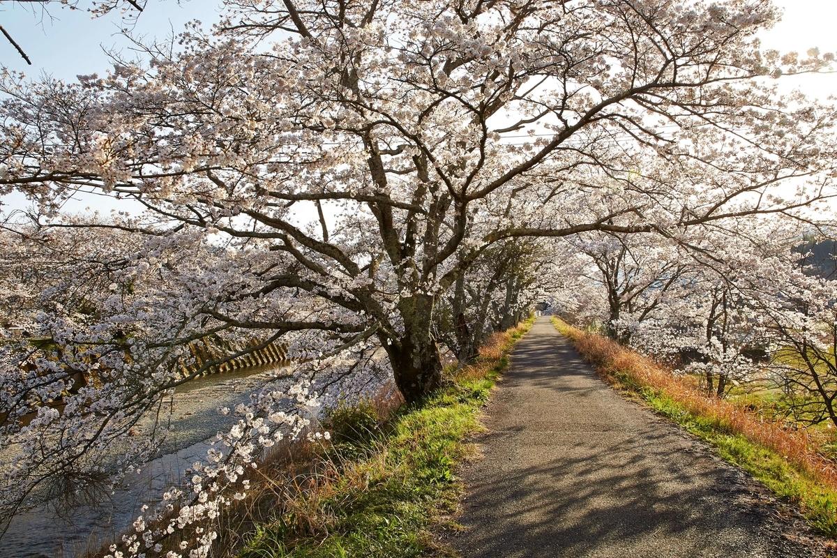 f:id:kyotoside_writer:20210311091235j:plain