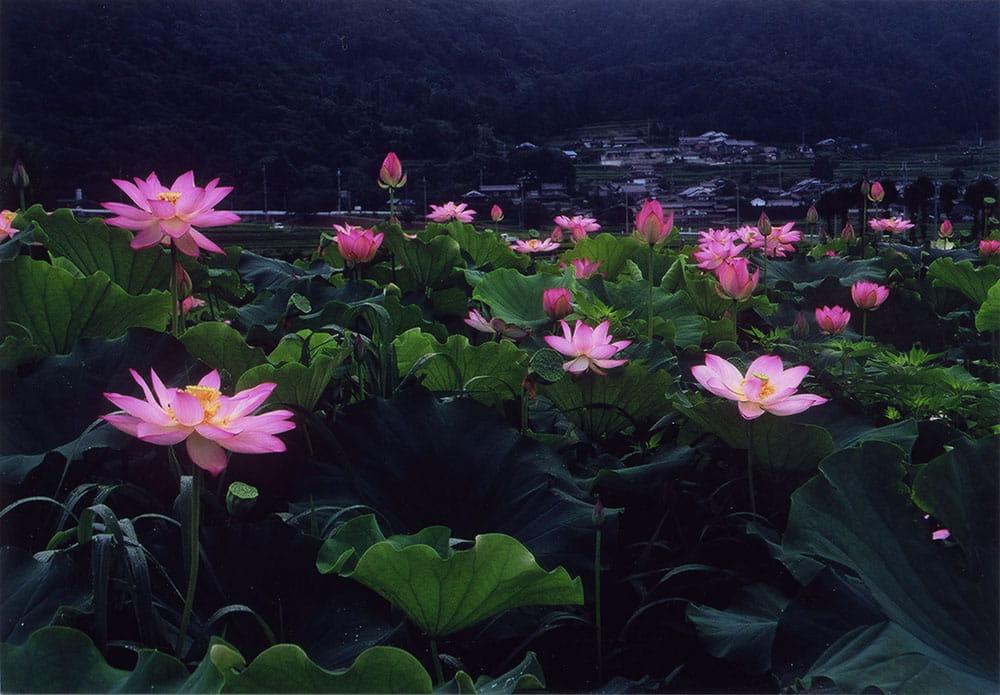 f:id:kyotoside_writer:20210606145433j:plain